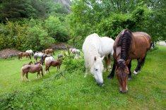 Lug_caballos_5076